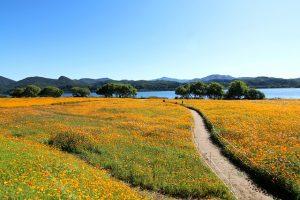 Blog over tuinieren